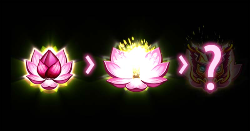 Mystery Lotus Feature